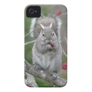 Squirrel eating iPhone 4 cover