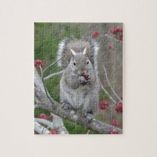 Squirrel eating jigsaw puzzle