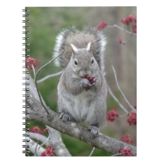 Squirrel eating notebook