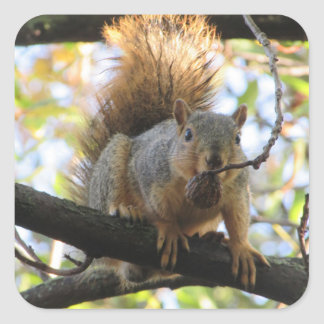 Squirrel Eating Nut on Tree Branch Cute Stickers
