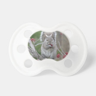 Squirrel eating pacifier
