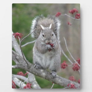 Squirrel eating plaque