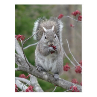 Squirrel eating postcard