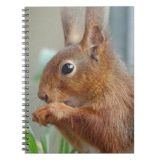 Squirrel ~ Écureuil ~ squirrels ~ by GLINEUR Spiral Notebook