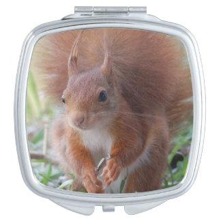 Squirrel ~ Écureuil ~ squirrels ~ by JL GLINEUR Compact Mirror