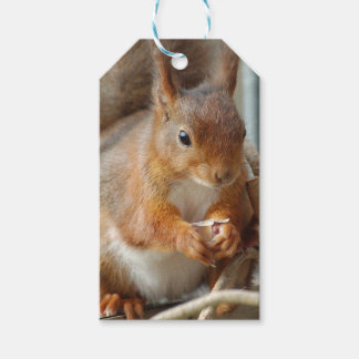 Squirrel ~ Écureuil ~ squirrels ~ GLINEUR Pack Of Gift Tags