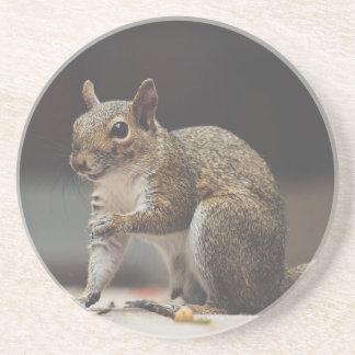 Squirrel Fluffy Coaster