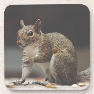 Squirrel Fluffy Coaster