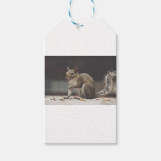 Squirrel Fluffy Gift Tags