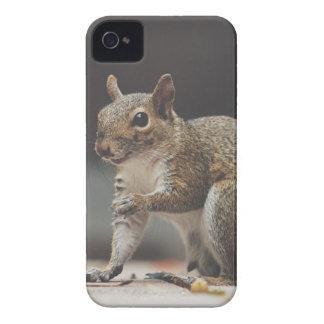 Squirrel Fluffy iPhone 4 Case-Mate Case