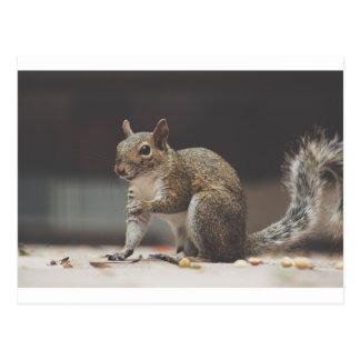 Squirrel Fluffy Postcard