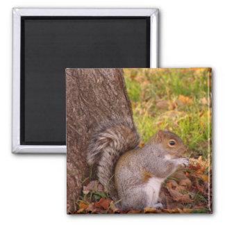 Squirrel Fridge Magnet