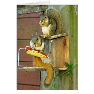 Squirrel friends cards