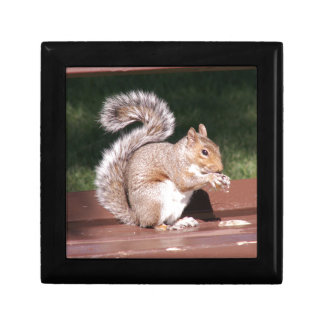squirrel gift box