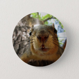 Squirrel Hanging Closeup 1 2 Inch Round Button
