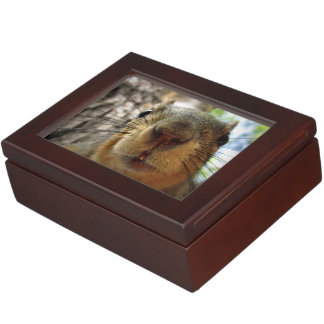 Squirrel Hanging Closeup 1 Keepsake Box