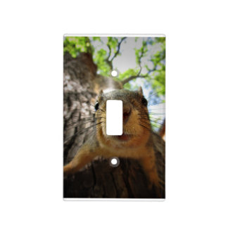 Squirrel Hanging Closeup 1 Light Switch Cover