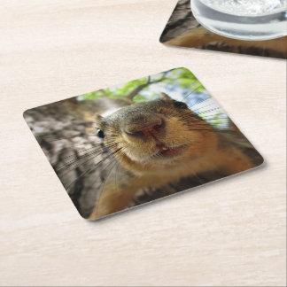 Squirrel Hanging Closeup 1 Square Paper Coaster
