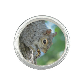 Squirrel Hanging in A Tree Photo Rings