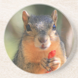 Squirrel Holding Cheese Puff coaster