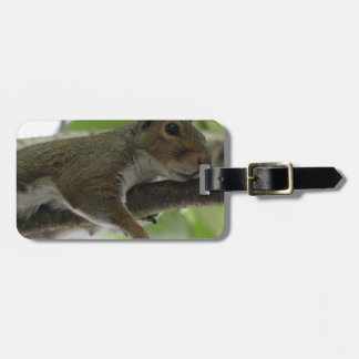 """Squirrel - """"Honey, It Ain't Easy Being a Women"""" Luggage Tag"""