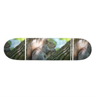 Squirrel in a Tree Skate Board Decks