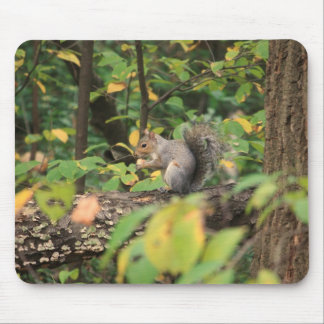 Squirrel in Autumn Mousepad