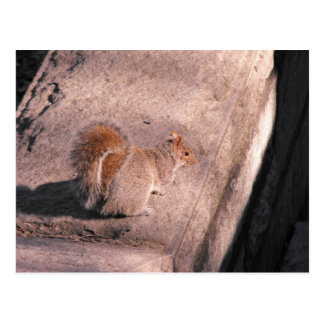 Squirrel in NYC Postcard