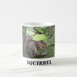 SQUIRREL IN PINE TREE EATING NUT COFFEE MUG