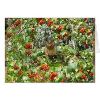 Squirrel in Rowan Card