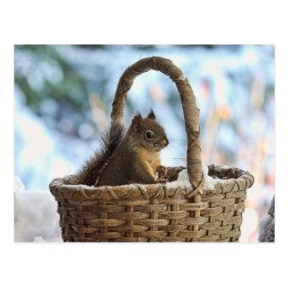 Squirrel in Snowy Basket in Winter Photo Postcard