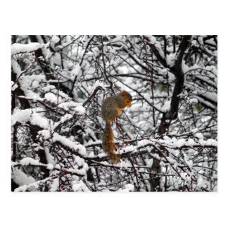 Squirrel in the Snow 6167 Postcard