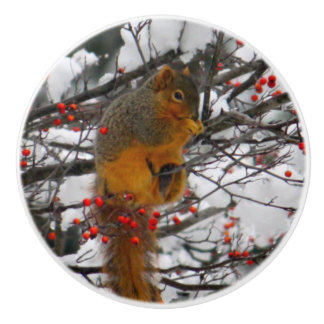 Squirrel in the Snow 6234 Ceramic Knob