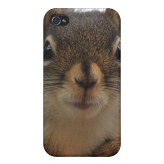 Squirrel iPhone 4/4s Case