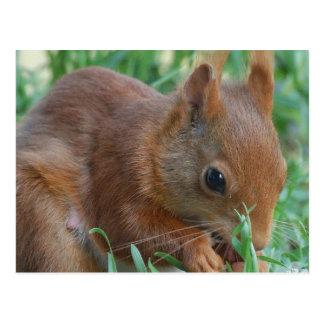 Squirrel - Jean Louis Glineur Photography Postcard
