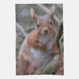 Squirrel Kitchen towel