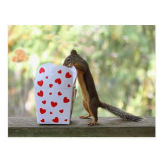 Squirrel Looking Inside Heart Box Postcard