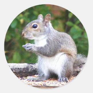 Squirrel Looking Round Sticker