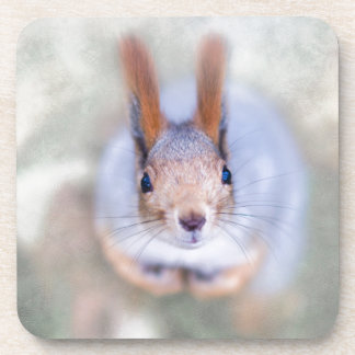 Squirrel looks at you from the bottom up coasters