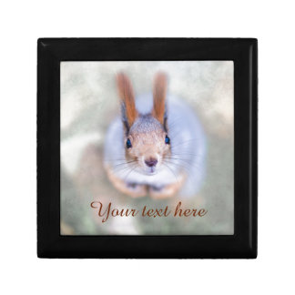 Squirrel looks at you from the bottom up keepsake box