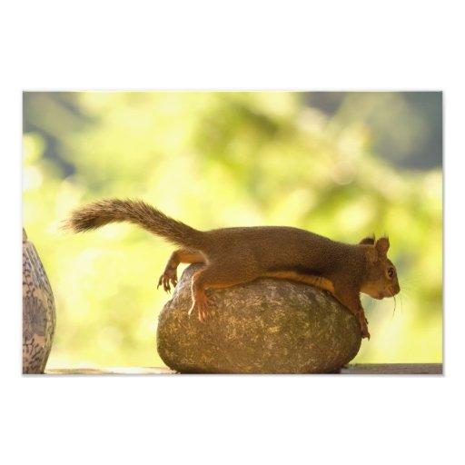 Squirrel Lying Down Photo