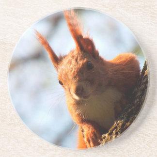 Squirrel Mammal Rodent Drink Coaster