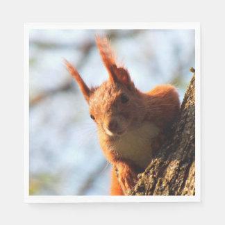 Squirrel Mammal Rodent Paper Napkins