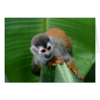 Squirrel Monkey Costa Rica Card