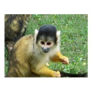 Squirrel Monkey Postcard