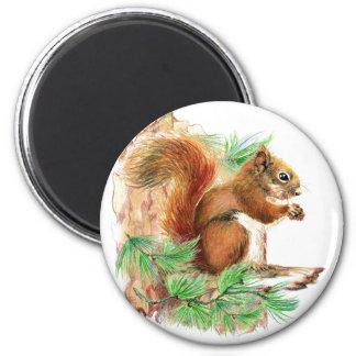 Squirrel Nature Fridge Magnet
