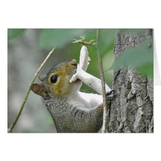 Squirrel Notecard