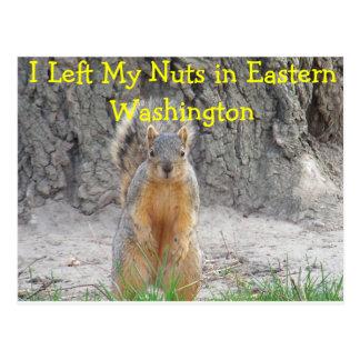 Squirrel Nuts Postcard