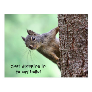Squirrel On a Tree Postcard