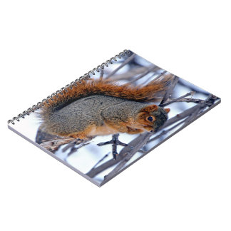 Squirrel on Branches Covered in Winter Snow Ice Notebook